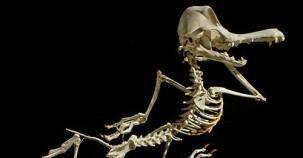 Çizgi film karakterlerinin anatomik yapısı