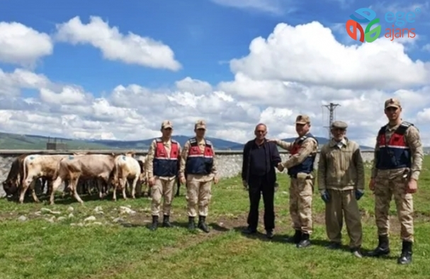 Ardahan'da Hayvan hırsızları jandarmadan kaçamadı