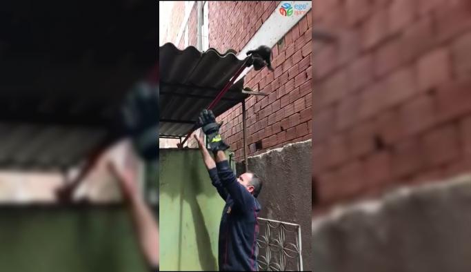 Kalorifer kazanına düşen yavru kediyi itfaiye kurtardı