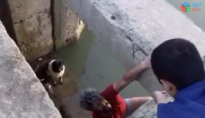 (Özel) Su kanalına düşen köpek kurtarıldı