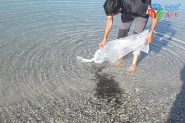 Bitlis'te 50 bin sazan yavrusu tatlı su ile buluştu