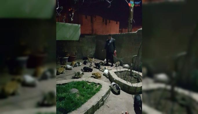 Erganili vatandaş, sokak kedilerine kucak açıyor
