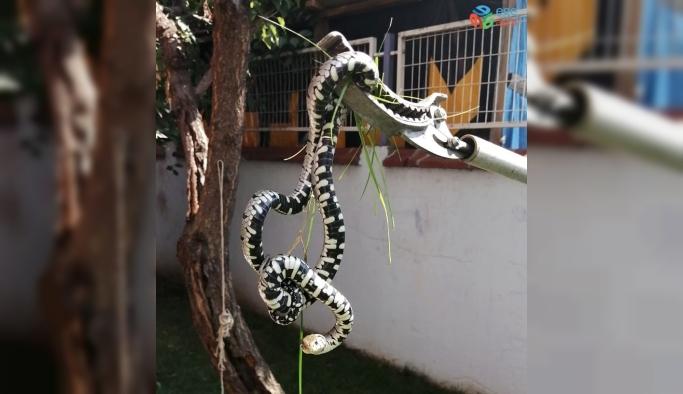 'Gördüğünüz yılanları öldürmeyin' çağrısı