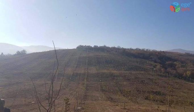 İki buçuk yıl önce bakımı yapılan ceviz ağaçlarından 15 ton ürün bekleniyor