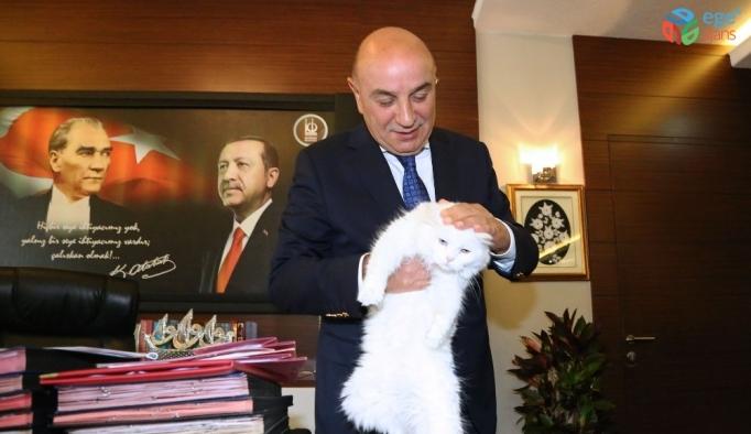 İşitme engelli Ankara kedisi Başkan Altınok'un koruması altında