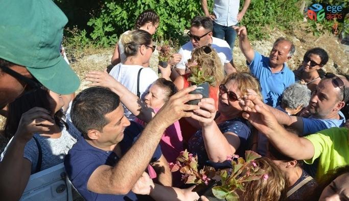 Kuşadası Caferli'de Çiçek Şenliğine büyük ilgi