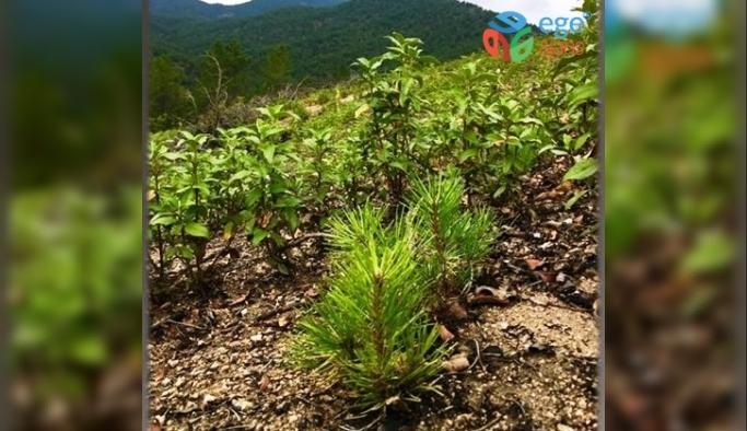 Kütahya Orman Bölge Müdürlüğü'nden ağaçlandırma çalışmaları