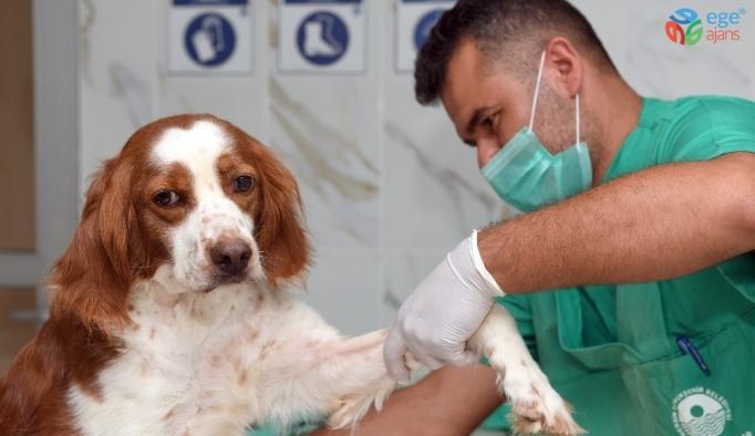 Mersin'de sokak hayvanları için kuaför hizmeti