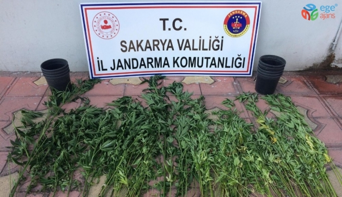Sakarya'da jandarma ekipleri ilçelerde uyuşturucuya geçit vermedi