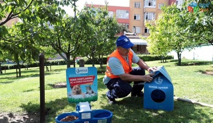 Sıcaktan bunalan sokak hayvanları için su ve mama hizmeti
