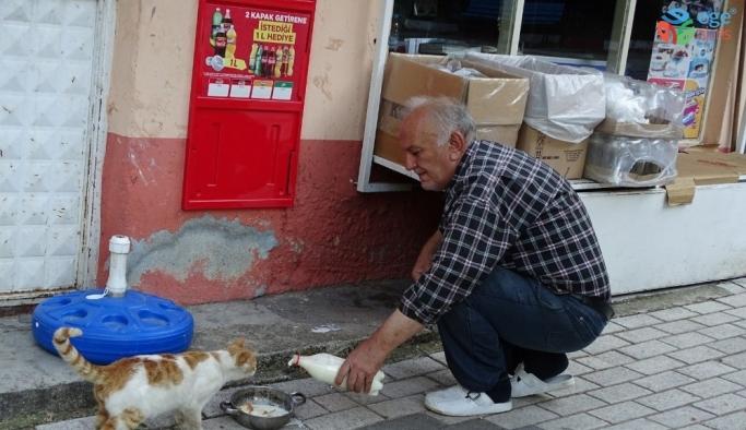 Veteriner Hekim, işyerinin önünde sokak hayvanlarını besliyor