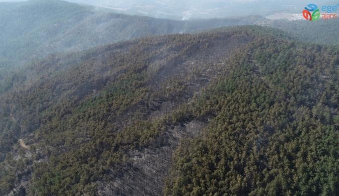 Bursa Orhaneli'de 60 hektarlık ormanlık alan kül oldu