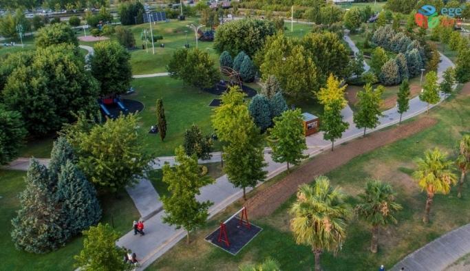 Büyükşehir 15 yılda 100 bin çınar ağacı dikti