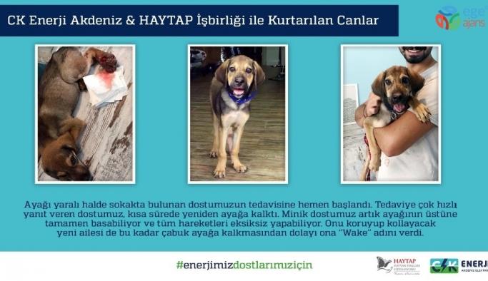 CK Enerji Akdeniz Elektrik ve HAYTAP işbirliği sokak hayvanlarına can oldu