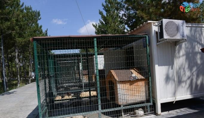 Çorum'da sokak hayvanları klimalı konteynırlarda serinliyor