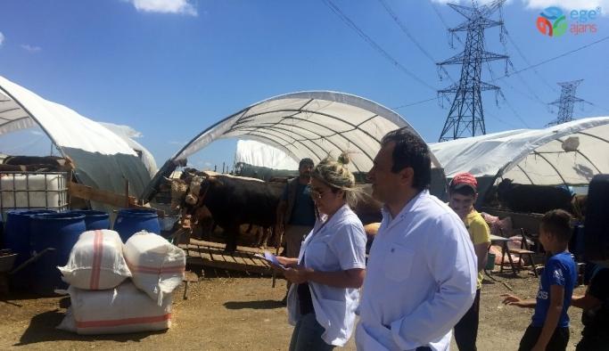 İstanbul İl Tarım ve Orman Müdürlüğü'nden kurban pazarında denetim