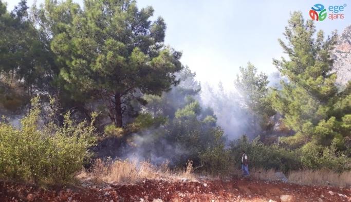 Orman yangınında 1 hektar ormanlık alan zarar gördü