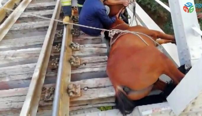 Raylara sıkışan at kurtarıldı