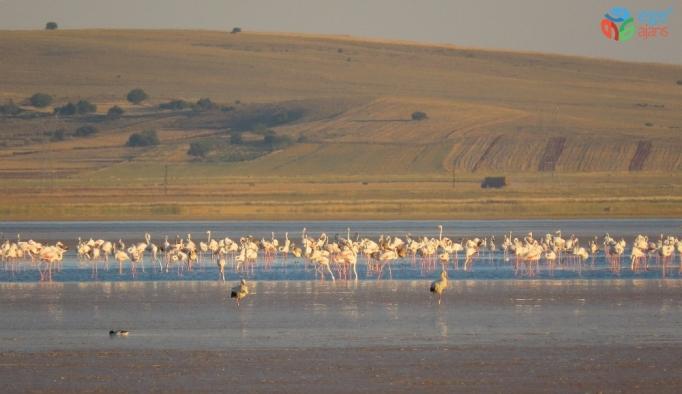 Su seviyesinin azaldığı Seyfe Gölünde kuş hareketliliği