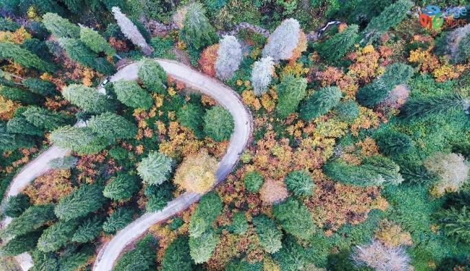 Doğal ağaç müzesinde büyüleyici sonbahar manzaraları