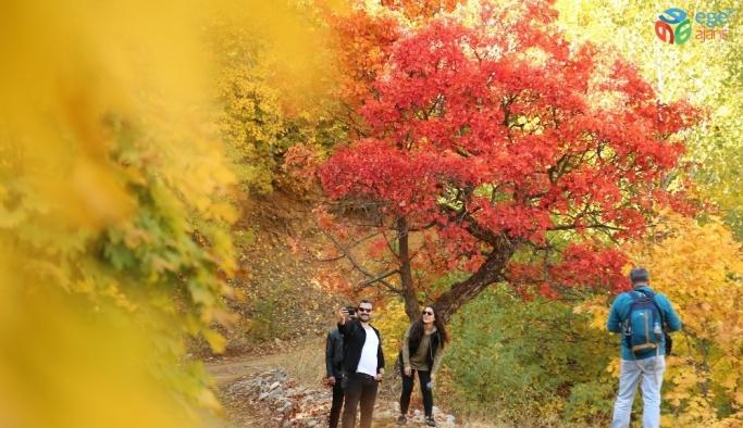 """Tunceli'de sonbaharla gelen """"Renk Cümbüşü"""""""