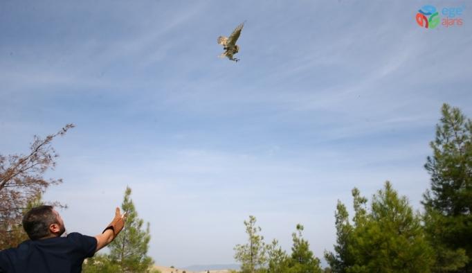 Peçeli baykuş özgürlüğüne uçtu