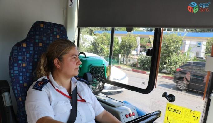 Kadın otobüs şoförü kedileri için görevinden istifa etti