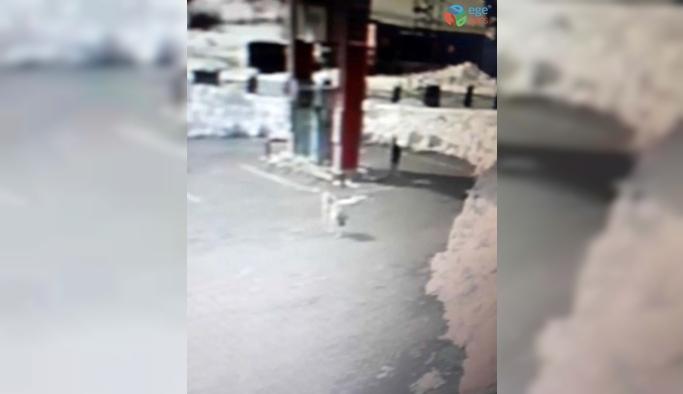 Kastamonu'da şehre inen kurtlar, benzinlikteki köpeği parçaladı