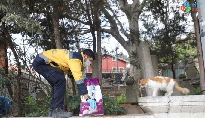 Eyüspultan'da sokak hayvanları unutulmadı