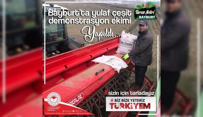 Bayburt'ta yulaf çeşit demonstrasyon ekimi yapıldı