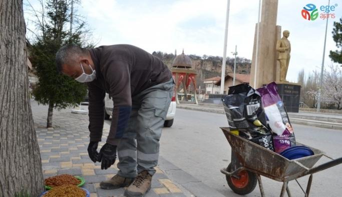 Bünyan Belediyesi sokak hayvanlarını unutmuyor