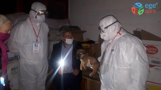 Gece yarısı alınan özel izinlerle trafik kazası geçiren 3 köpek istanbul'a götürüldü