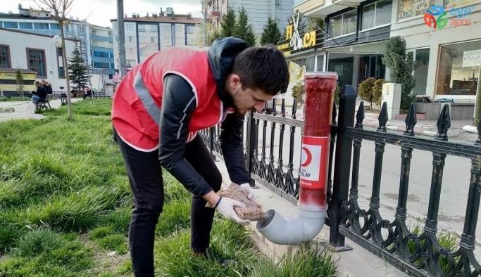 Kızılayın genç gönülleri aç kalan sokak hayvanlarına sahip çıktı