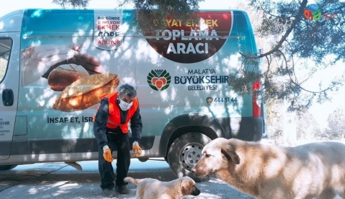 Malatya'da parklara sokak hayvanları için ekmek bırakılıyor