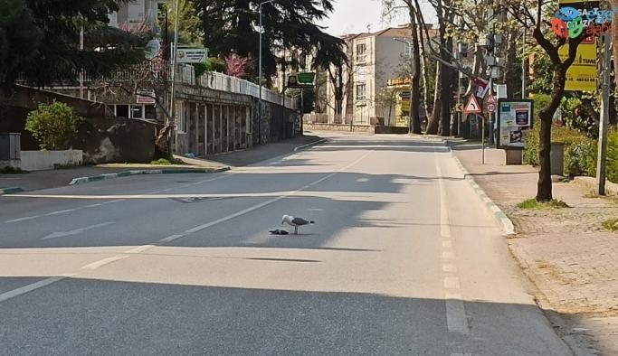 Sokağa çıkma yasağı geldi caddeler martılara kaldı