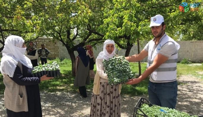 Edremit'te çiftçilere 170 bin sebze fidesi dağıtıldı