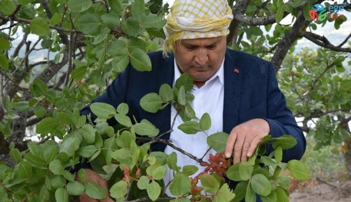 Yunusemre Belediyesi üreticiye 20 bin fidan dağıttı