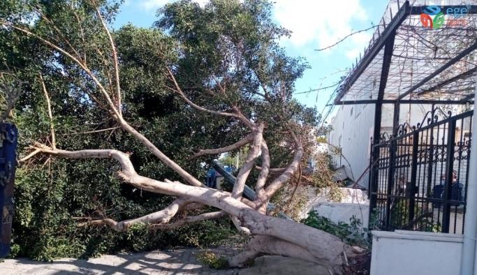 Ağaçlar fırtınaya dayanamadı