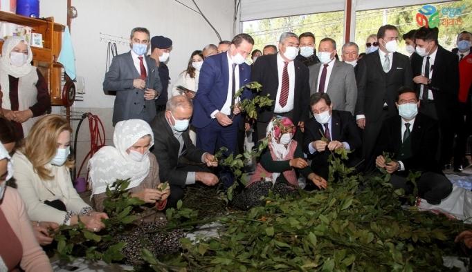 Fethiye'de 500 bin Ada Çayı ve Kekik fidesi dağıtıldı