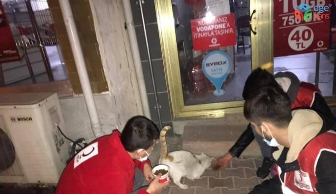 Emet'te kısıtlamada sokak hayvanları unutulmadı