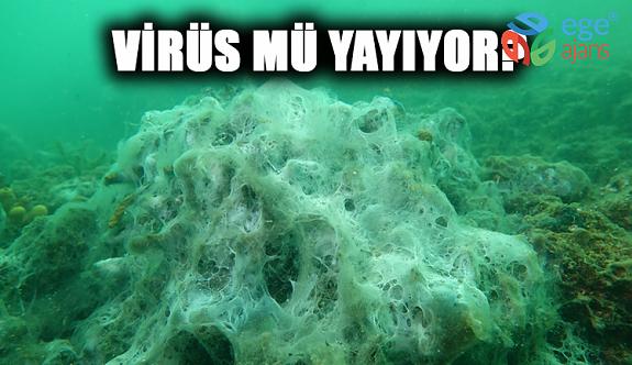 Şok İddia! Müsilaj Virüs Mü Yayıyor?