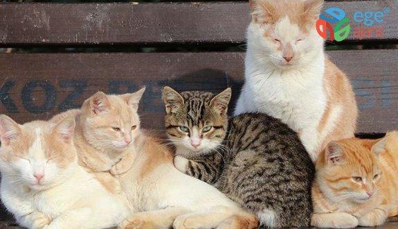 Hayvanları Koruma Kanunu TBMM Genel Kurulunda kabul edildi