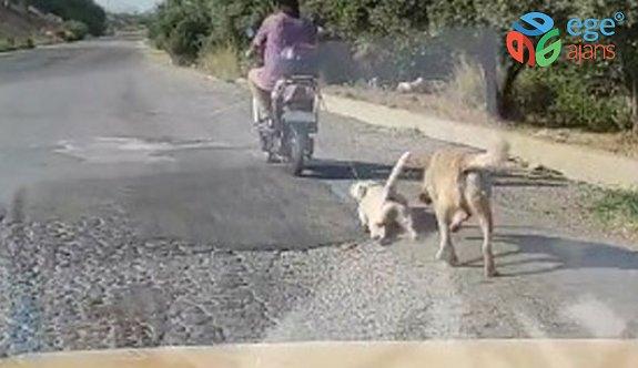 Köpeğe eziyeti kayda alıp şahsı polise teslim ettiler