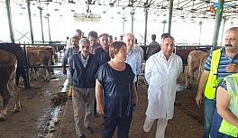 Kurbanlıklar hayvan pazarına kontrol edilerek alınıyor