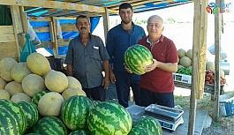 Sinop'un yerli karpuzları çıktı