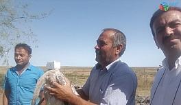 Yaralı flamingo tedavi edilerek doğaya bırakıldı