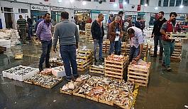 Ege'de balık bereketi