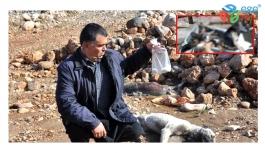 Bartın ve Gaziantep'te 7 köpek zehirlenerek telef edildi