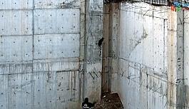 Kuş avlamak isteyen kedi inşaatın temelinde mahsur kaldı