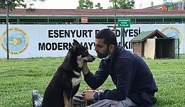 (Özel) Trafik kazasında engelli kalan köpek yürüteç ile yeniden hayata tutundu